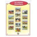 IMAGES LES ANIMAUX SAUVAGES - BOÎTE DE 100